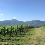 Wine tasting marathon in Franciacorta with FISAR Firenze – May 2014