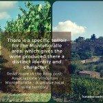 Montefioralle – A unique local wine territory