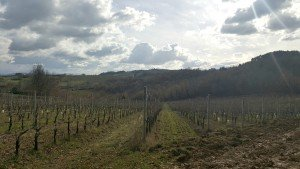 Exploring the treasures of Umbria: Grechetto, Sagrantino & Olive Oil
