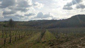 Exploring the treasures of Umbria: Grechetto, Sagrantino & Olive Oil