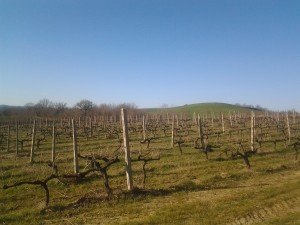 Anteprime - Tasting the New Wine Vintages in Tuscany