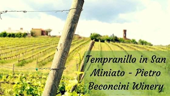 Tempranillo in San Miniato – Pietro Beconcini Winery