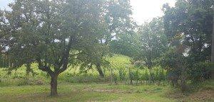 A Taste of Montepulciano - Valdipiatta Winery