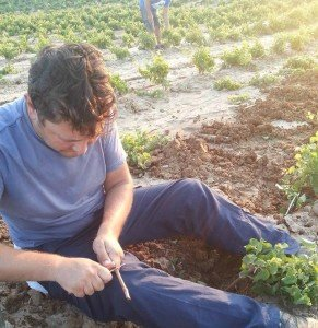 Viticulture - A Family Tradition at Cote di Franze in Calabria