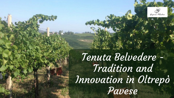 Tenuta Belvedere - Tradition and Innovation in Oltrepò Pavese