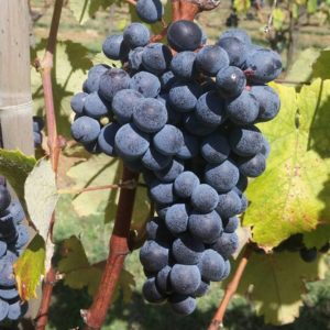 grapevineadventures.com