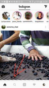 Insta Wine