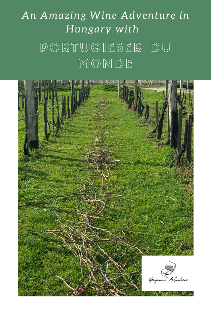 An Amazing Wine Adventure in Hungary with Portugieser Du Monde This year I attended the 6th edition of the Portugieser Du Monde wine event as part of the wine jury. The event is held in Pécs, Hungary.