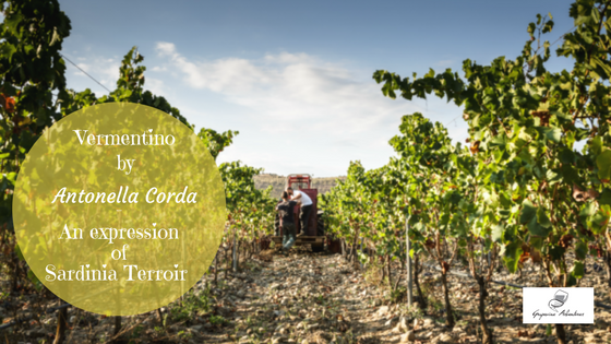 Vermentino by Antonella Corda – An expression of Sardinia Terroir