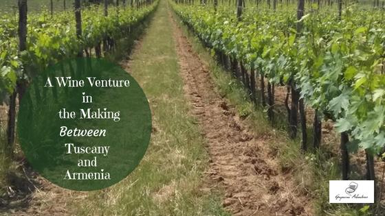 wine venture
