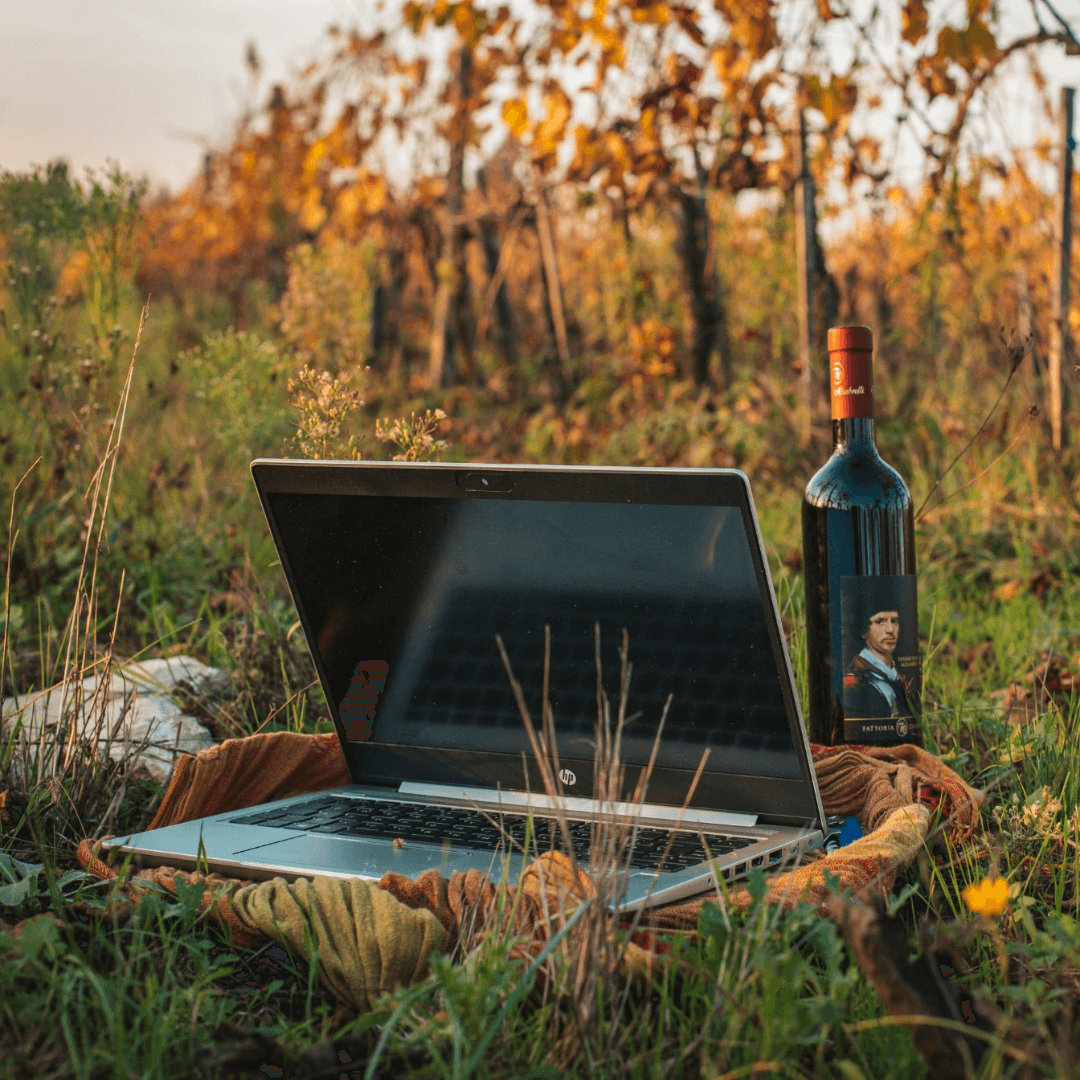 Wine and Social - Katarina Grapevine Adventures