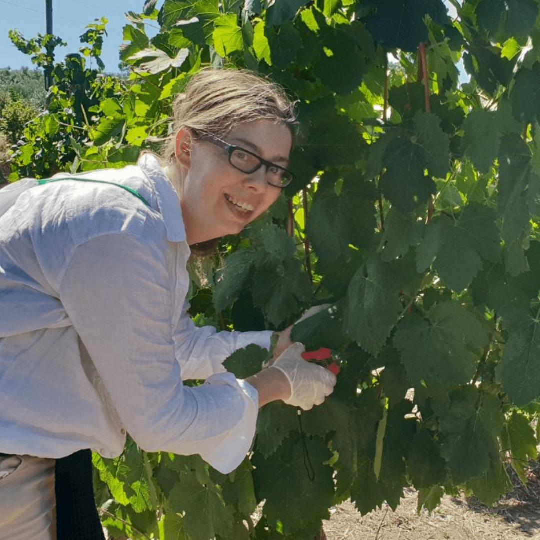 Wine courses - Katarina Grapevine Adventures