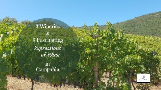 Vineyard_in_Cilento_Campania