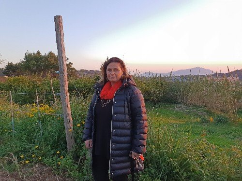 falanghina_vineyard_campania