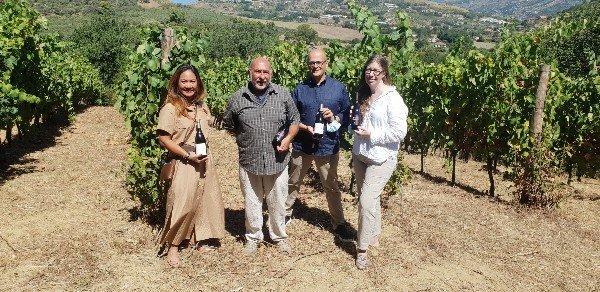vineyard_cilento_campania