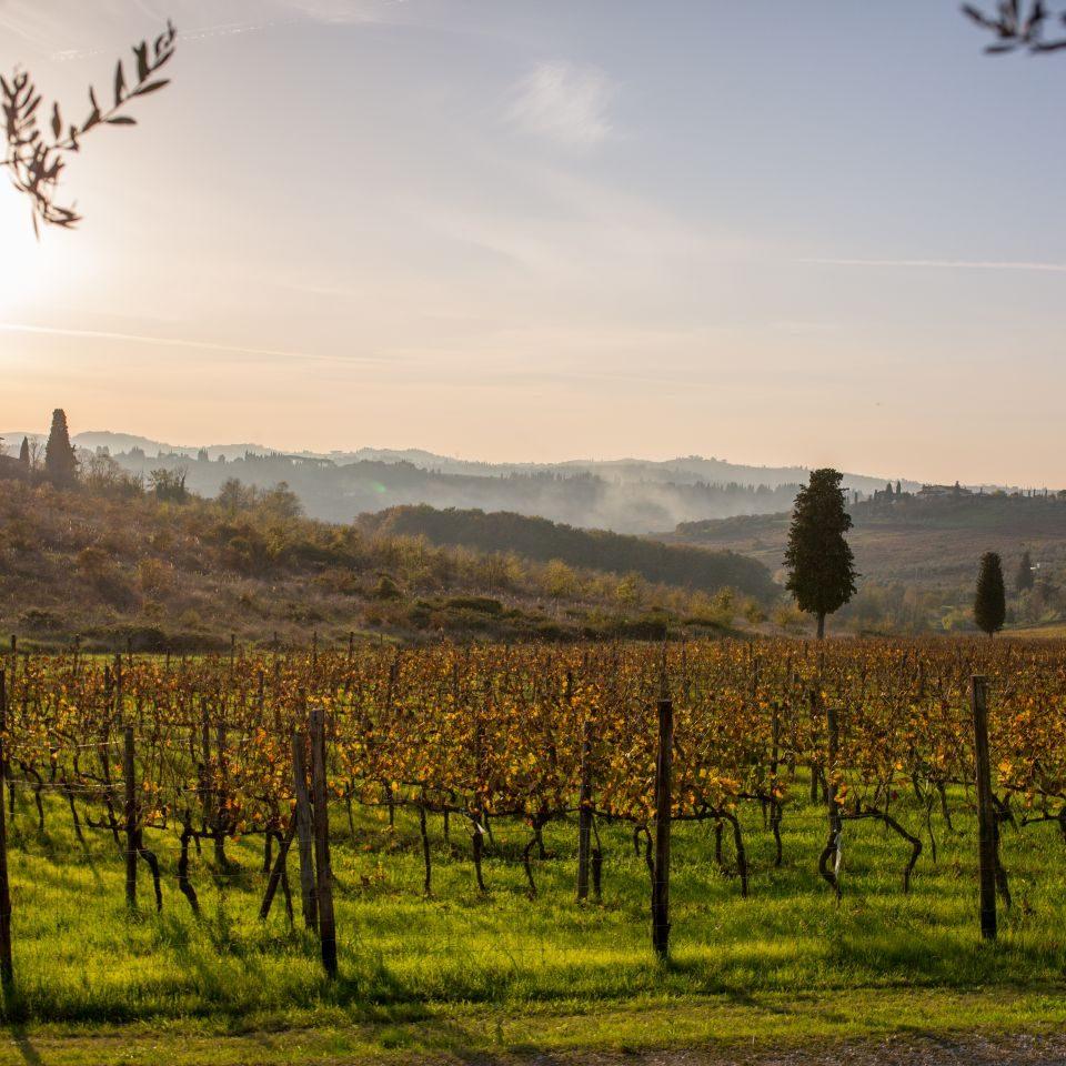 grapevine adventures vineyard